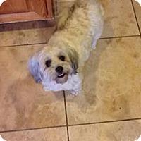 Adopt A Pet :: Fawn - LEXINGTON, KY