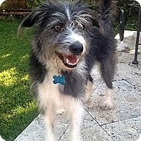 Adopt A Pet :: Potter - Houston, TX