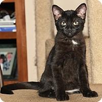 Adopt A Pet :: Hyde - North Highlands, CA