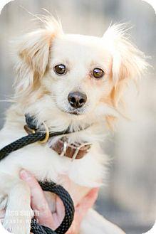 Spaniel (Unknown Type) Mix Dog for adoption in Plano, Texas - Austin