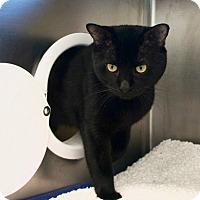 Adopt A Pet :: A332795 - Boston, MA