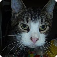 Adopt A Pet :: Sunnie - Hamburg, NY