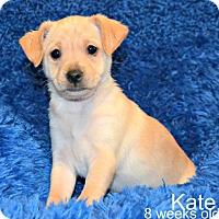 Adopt A Pet :: Kate - Yreka, CA