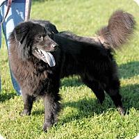 Adopt A Pet :: Buddy - Manahawkin, NJ