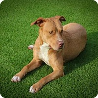 Adopt A Pet :: LULU - West Palm Beach, FL