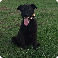 Adopt A Pet :: Tonto - Stamford, CT
