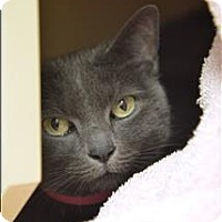 Adopt A Pet :: Emma - Albuquerque, NM