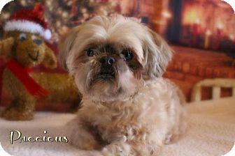 Shih Tzu Dog for adoption in Benton, Louisiana - Precious