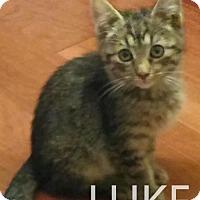 Adopt A Pet :: LUKE - Corona, CA