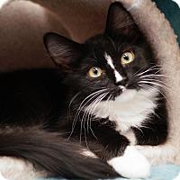 Adopt A Pet :: Stevia - Naperville, IL
