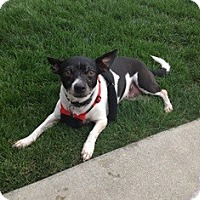 Adopt A Pet :: Ma - Tustin, CA