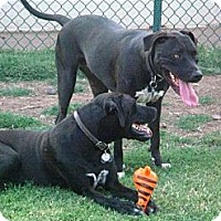 Adopt A Pet :: Heidi & Lars - Gilbert, AZ