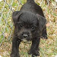 Adopt A Pet :: Dougie - La Habra Heights, CA