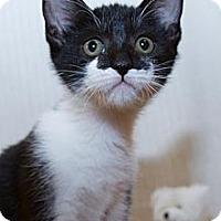 Adopt A Pet :: Trudi - Irvine, CA