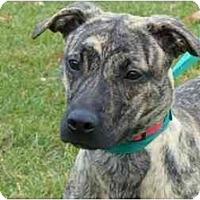 Adopt A Pet :: Gabby - Marysville, OH
