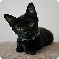 Adopt A Pet :: Pepsi - Sacramento, CA