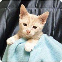 Adopt A Pet :: Eddie - Orlando, FL