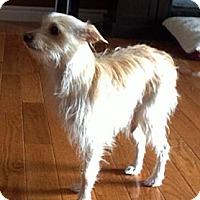 Adopt A Pet :: Dezi - Toronto, ON