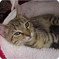 Adopt A Pet :: Huey - The Colony, TX