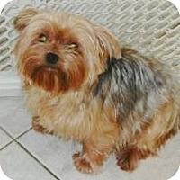 Adopt A Pet :: Sky - Orange, CA
