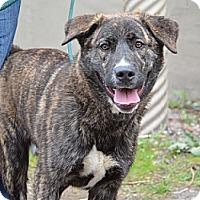 Adopt A Pet :: Cheech - Hamilton, ON