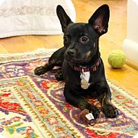 Adopt A Pet :: Dudley - Homewood, AL