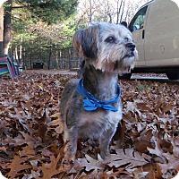 Adopt A Pet :: Thor - Muskegon, MI