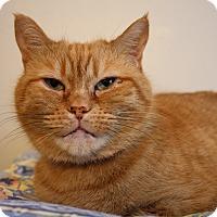 Adopt A Pet :: Pollyanna - Orillia, ON
