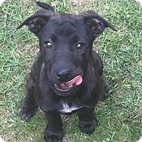 Adopt A Pet :: Kayla - Millersville, MD
