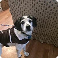 Adopt A Pet :: Skip - Ogden, UT