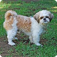 Adopt A Pet :: BRANDO - Los Angeles, CA