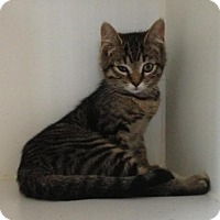 Adopt A Pet :: Barbara - Caistor Centre, ON