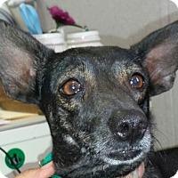 Adopt A Pet :: Penny - Visalia, CA