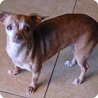 Adopt A Pet :: Dede - San Diego, CA