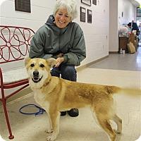 Adopt A Pet :: Shiba - Elyria, OH