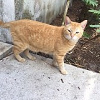 Adopt A Pet :: Colton - Naples, FL