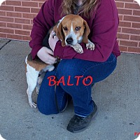 Adopt A Pet :: BALTO - Ventnor City, NJ