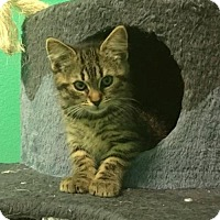 Adopt A Pet :: Scully - Hampton, VA
