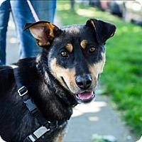 Adopt A Pet :: Katara - Maple Ridge, BC