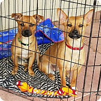 Adopt A Pet :: TANNER - Gustine, CA
