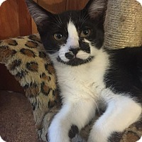 Adopt A Pet :: Cassidy - Davison, MI