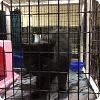 Adopt A Pet :: Pegasus - Janesville, WI