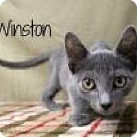 Adopt A Pet :: Winston - Newport, KY