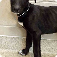 Adopt A Pet :: Ursula - Oswego, IL