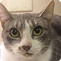 Adopt A Pet :: Kaya - Wildomar, CA