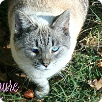 Adopt A Pet :: Azure - Columbia, TN