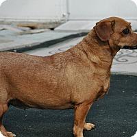 Adopt A Pet :: Rosita - West Palm Beach, FL