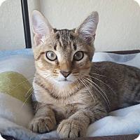 Adopt A Pet :: Finnick - Brandon, FL