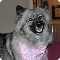 Adopt A Pet :: Nala - Los Altos, CA