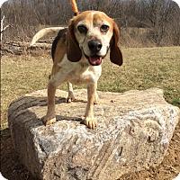 Adopt A Pet :: Allie Mae - Mechanicsburg, OH